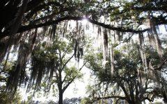 University digging into sustainability