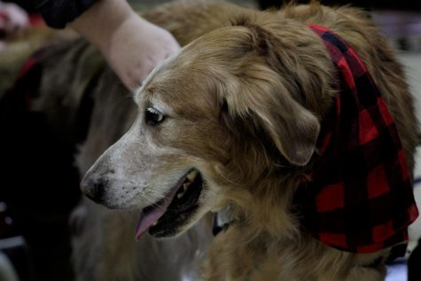 Oliver is a therapy dog who accompanies clients going through their speech therapy session.