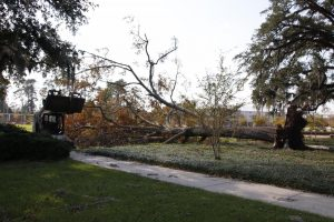 Storm aftermath: Photo Gallery
